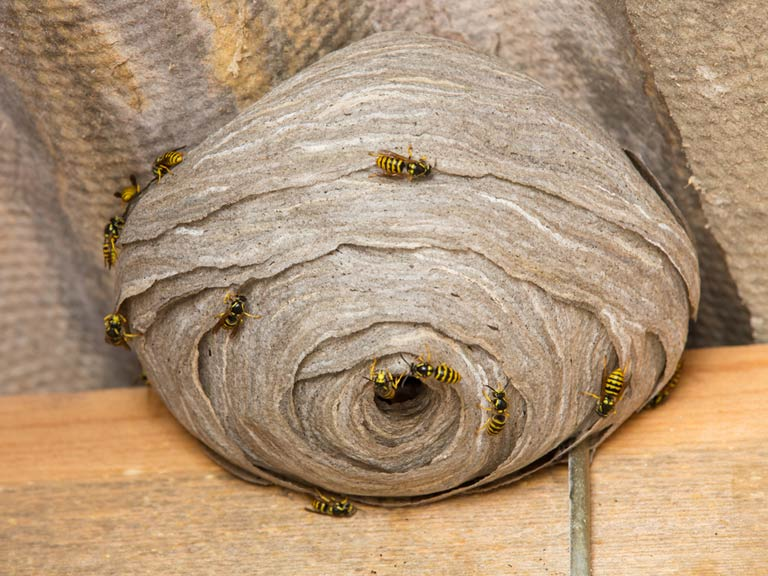 wasp nest removal berkshire