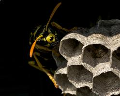 wasp nest removal bracknell