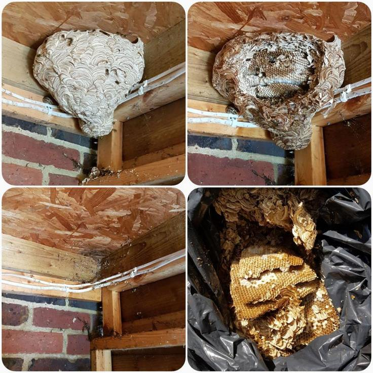 wasp nest removal process