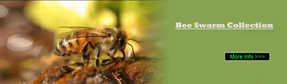 Bee Nest Removal Berkshire